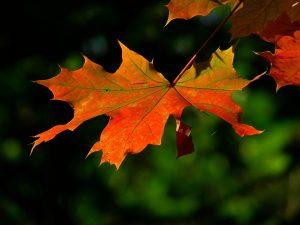 autumn, leaf, colorful