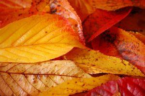 bures, automne, couleurs